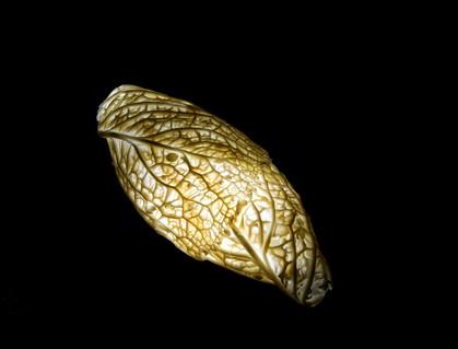 Cabbage Lamp