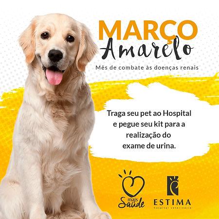 Março_Amarelo_Canino.jpeg