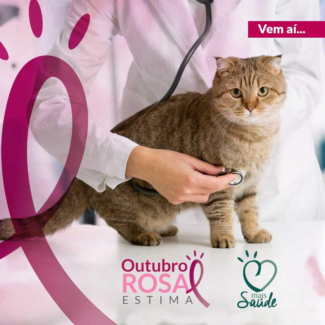 Estima Rosa1.jpeg