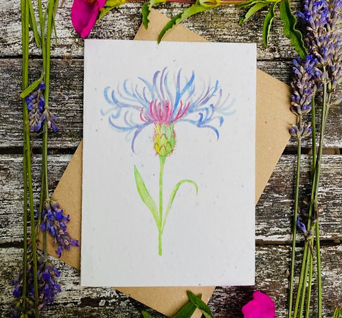 'Centaurea flower' plantable card - Loop Loop