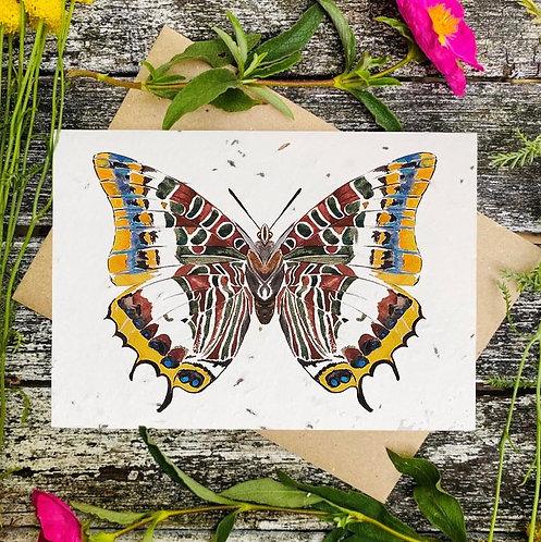 'Emperor butterfly' plantable card - Loop Loop