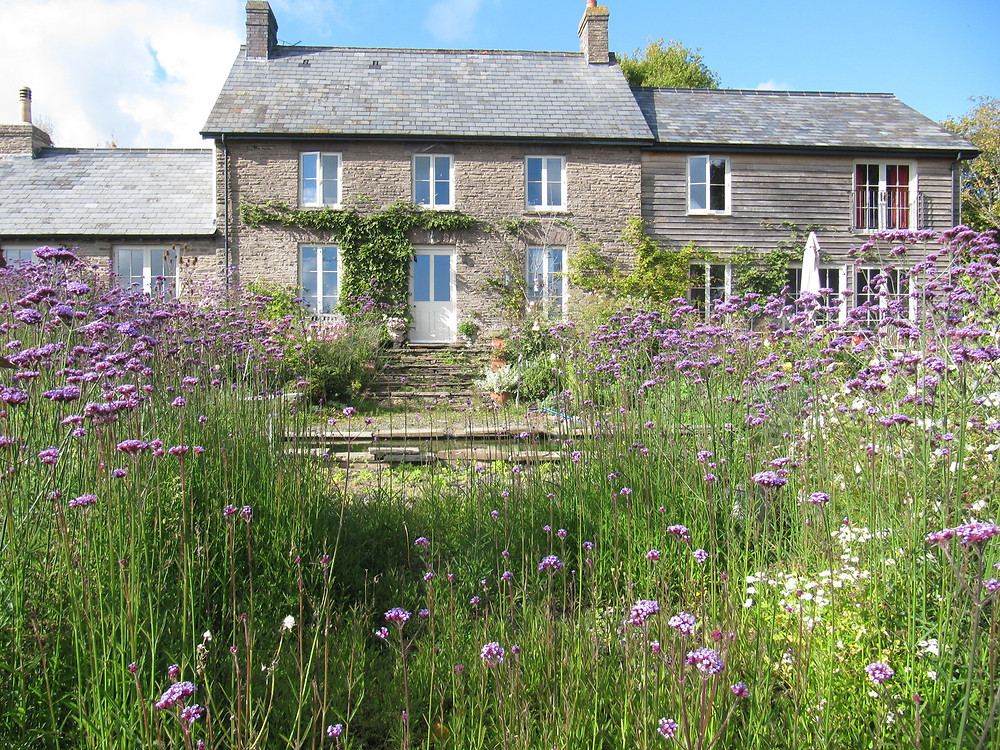 A pretty country cottage in Herefordshire, surrounded by self sown Verbena bonarienses.