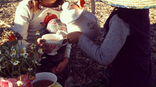 Welcome to the Wisdom Nectar Tea Family