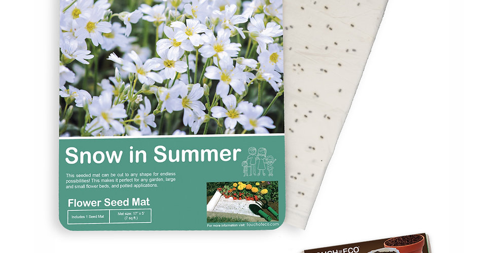 SNOW IN SUMMER FLOWER SEED MAT WITH SOIL BLOCK