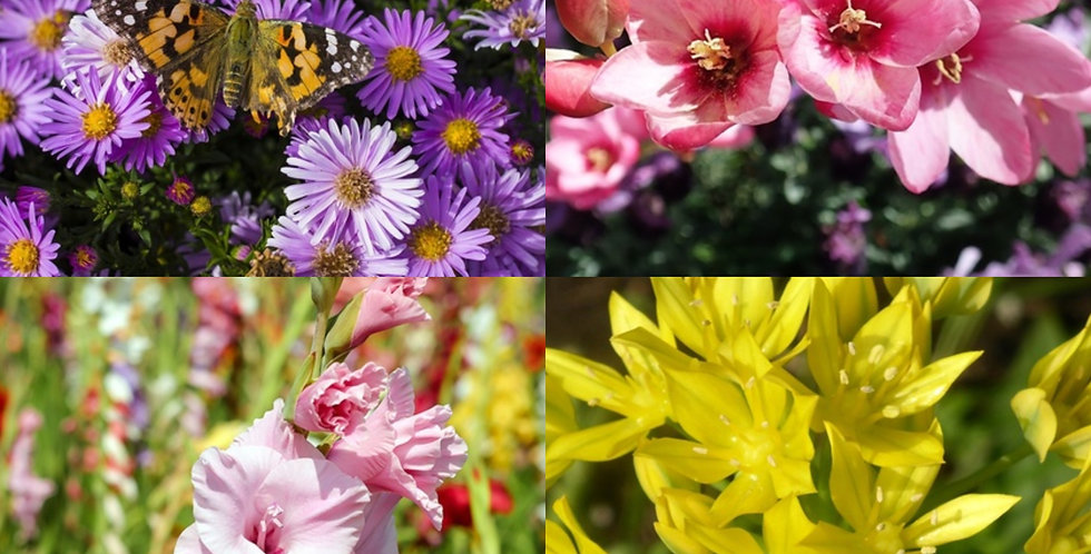 BEES & BUTTERFLY FLOWER BULB COLLECTION - PACK OF 100