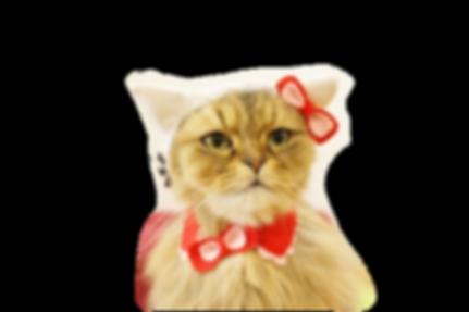 こて キティ.png