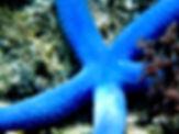 StarfishBlue.jpg