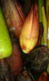 BananHeart.jpg