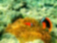 Snorkeling Bohol Philippines