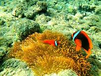 Immersioni Filippine