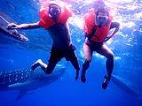 viaggio squali balena Filippine