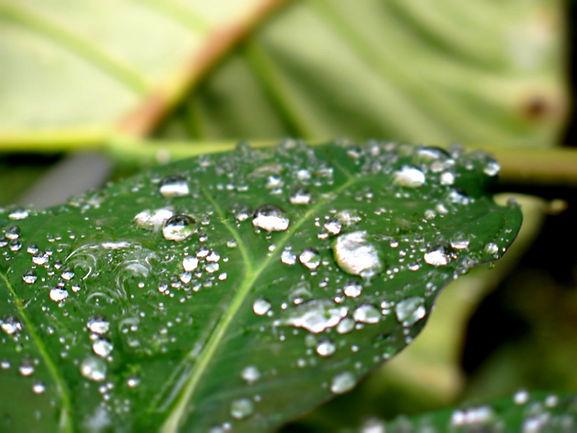 TropicalClimatePhilippines.jpg