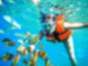 SnorkelFish.jpg