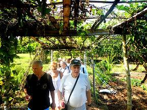 Filippine Bohol campagna.JPG