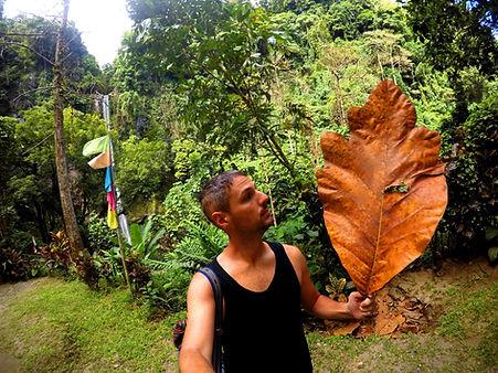 Camiguin leaf