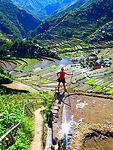 Filippine risaie terrazzate