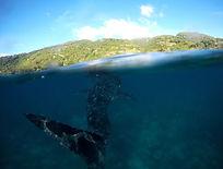 Oslob Whale Sharks watching