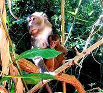 Scimmie filippine