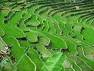 Tour Rice Terraces Philippines