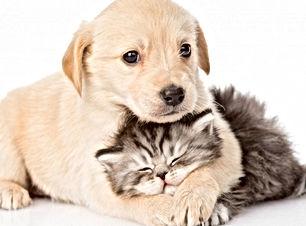 Cani-e-gatti.jpg
