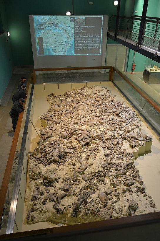 Isernia_Museo Paleolitico.JPG