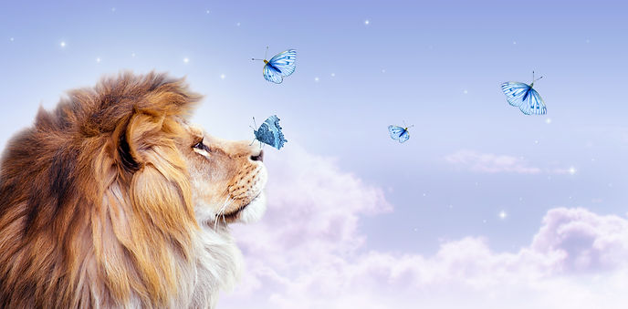 African lion with butterfly sitting on n