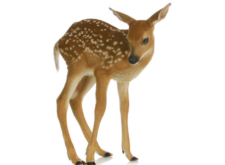 """Do """"The Wobble""""                                         -A lesson from FAWN-"""