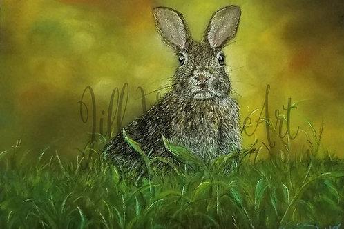 "Rabbit Artist Print 7x5"" to benefit Long Island Rabbit Rescue"