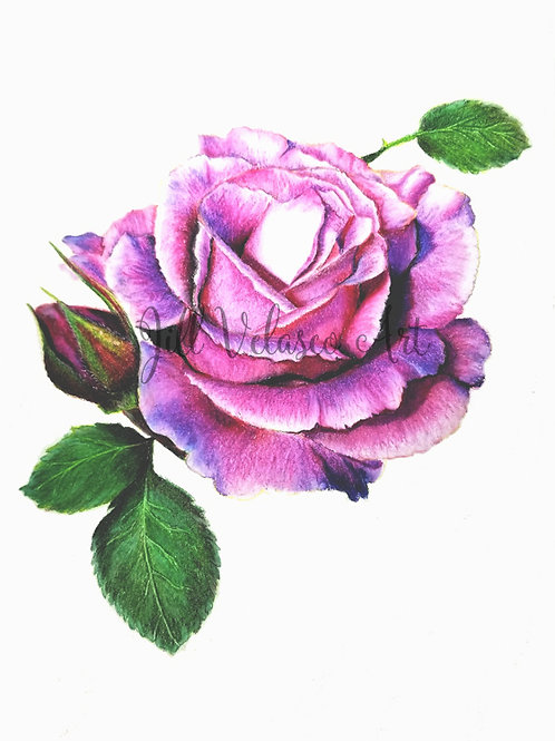"Purple Rose Artist Print 8x10"""