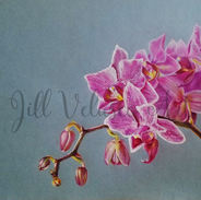 orchid for web preview.jpg