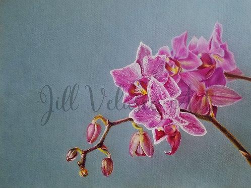 "Orchid Artist Print 10x8"""