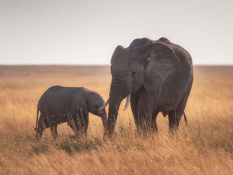 Hayvanlarda Torun Sevgisi