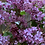 Thumbnail: Lilac Arrangement