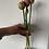 Thumbnail: Tulip-Copper Image