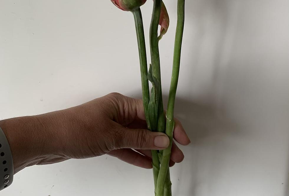 Tulip-Copper Image