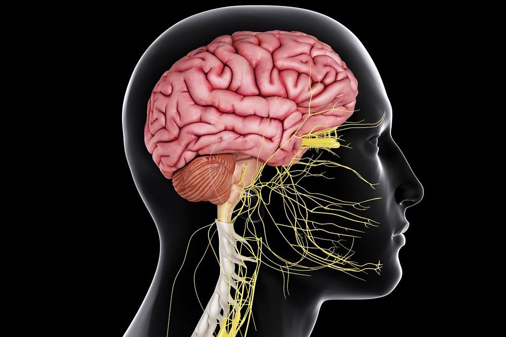 """alt-●Для многих обращение к психиатру является постыдным, так как в голове появляется """"типичный"""" образ психически больного человека - непредсказуемый, возбужденный, агрессивный и, как правило, с топором. И в обществе существуют устойчивые стереотипы, что если грустно, то надо взять себя в руки, если тревожно - то надо успокоиться. Все это от того, что головной мозг для большинства людей является мифической и непознанной частью человеческого организма, куда """"лучше не лезть"""". ●Вы должны понимать, что головной мозг абсолютно такой же орган, как желудок, сердце, печень или любой другой. На него возложены функции по формированию психики (внимания, памяти, мышления, восприятия и др.), так же как на желудок возложены функции по накоплению, механической и химической обработке пищи. Как и любой другой орган, мозг работает посредством биохимических реакций, только более сложных.  ●И если у нас заболит желудок или мочевой пузырь или прямая кишка, мы не будем стыдиться и быстрей пойдем на прием к хорошему врачу, а вот принять то, что головной мозг также может болеть, мы почему-то не можем!  Подведем промежуточный итог:  ▲Головной мозг - это пусть и очень важный, но всего лишь один из многих органов, которые ТОЛЬКО ВМЕСТЕ составляют единое целое под названием человеческий организм.  ▲Головной мозг выполняет свои функции с помощью биохимических реакций, как любой другой орган.  ▲И наконец, как любой другой орган организма, головной мозг может заболеть."""