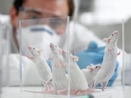 Ученые нашли метод вылечить нейропатическую боль при повреждении нервов на животных моделях