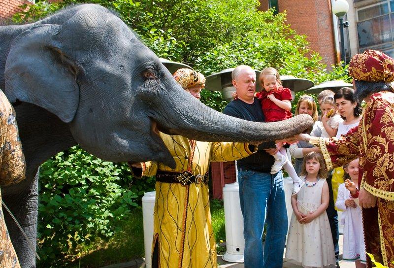 номер со слоном