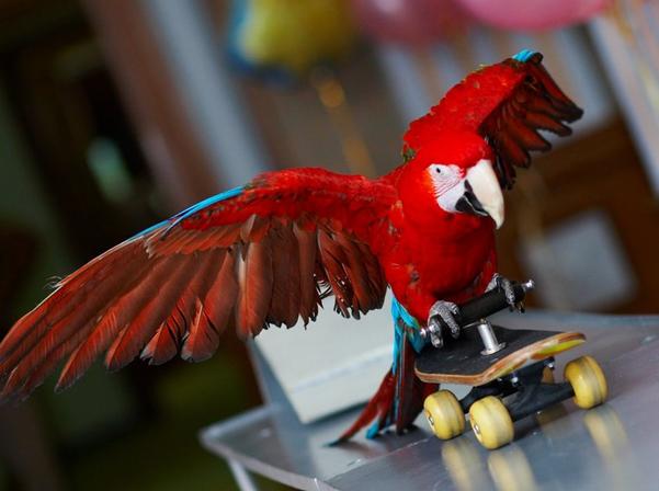 номер с попугаем