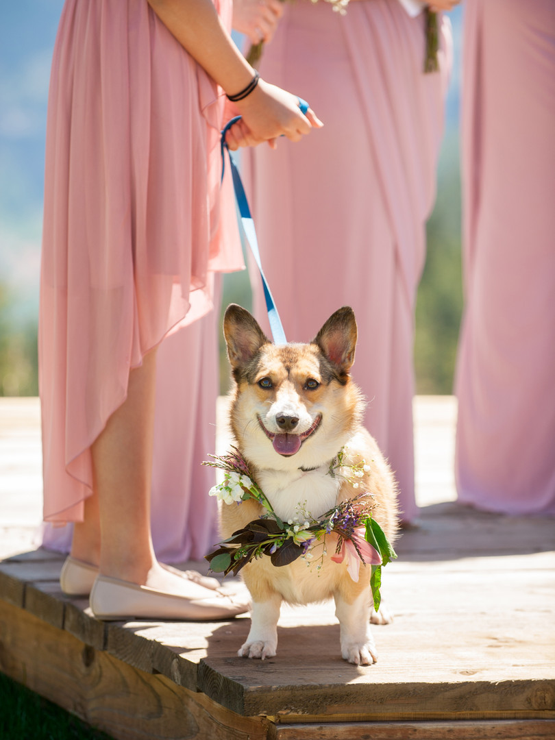 BVF - Wedding Details - Dog Collar Close