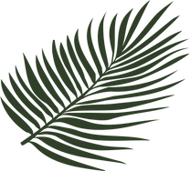 Palm Leaf Vector_Left.png