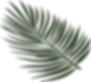 Palm Leaf Vector.png