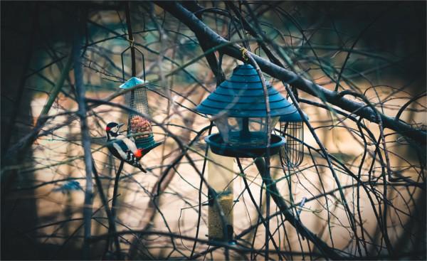 Die Early Birds bekommen ihre Ferienwohnung bei gutem Revenue Management schon zum Durchschnittspreis