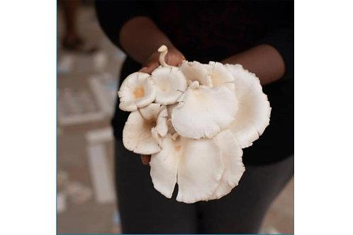 Fresh Ganoderma Mushroom (100g)