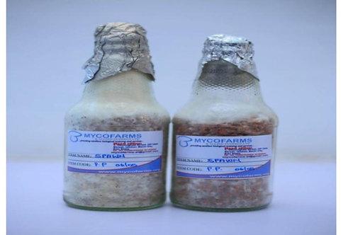 Milky Mushroom Spawn (170g)