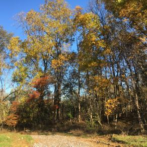 Fall Days at Sundogs