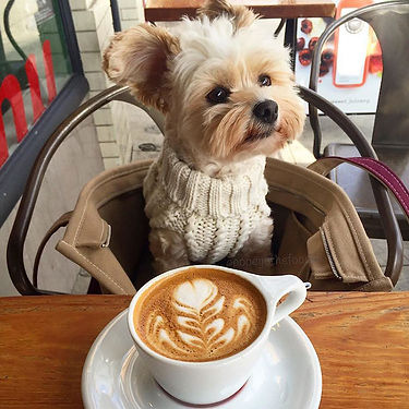 rescue-dog-restaurants-food-instagram-po