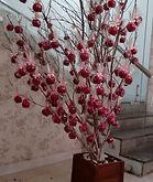 árvore de maçã do amor
