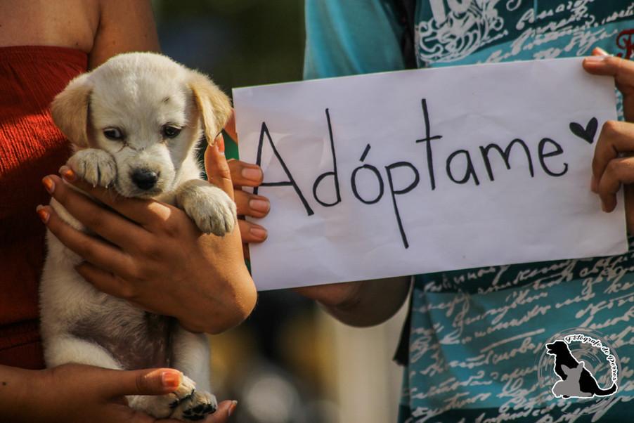 Día internacional Del Perro Adoptado.
