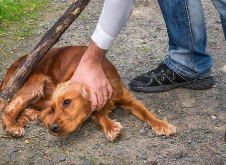 Morena propone hasta cinco años de cárcel por maltrato animal